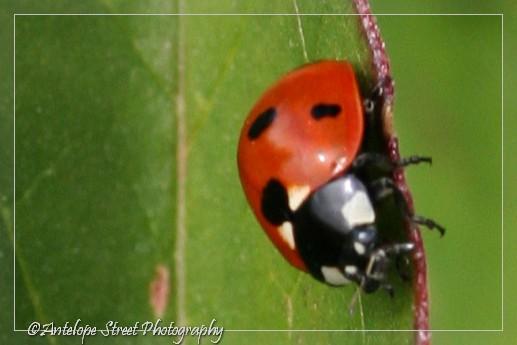 21-ladybug3