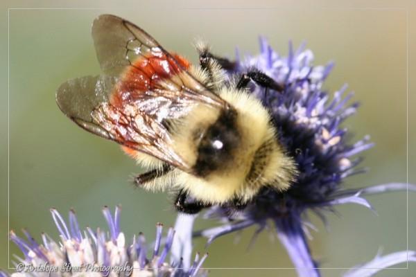 24-bumblebee-1