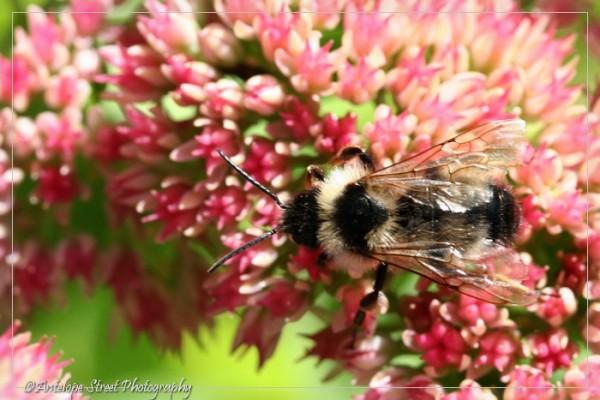 24-bumblebee2
