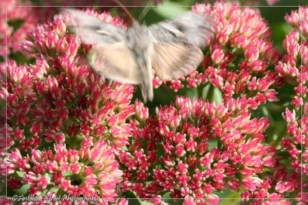 26-moth3