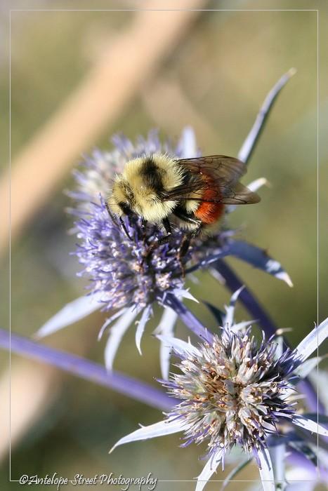 35-bumble-bee-2