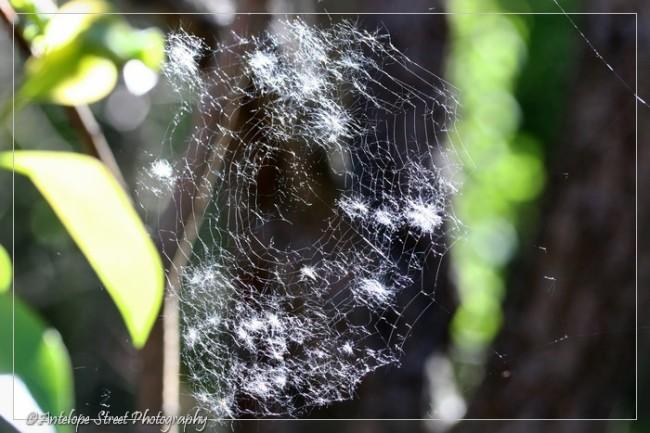 40-fluff-on-web