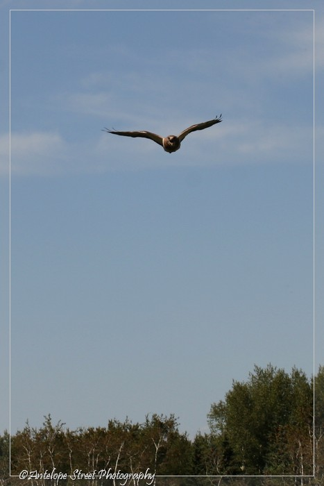 5-hawk1