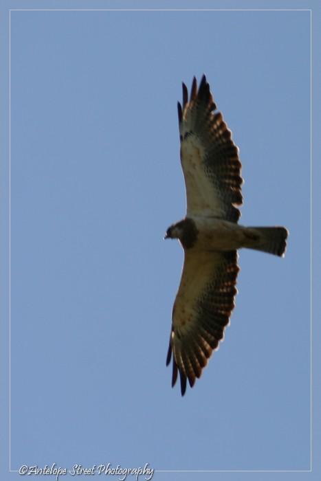 5-hawk2