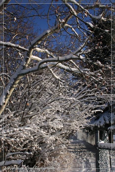 9-april-snow