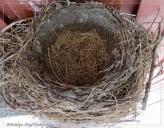 Day 15 - Empty nest