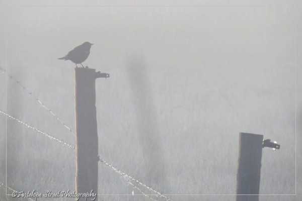 13-fog-bird-on-fence1