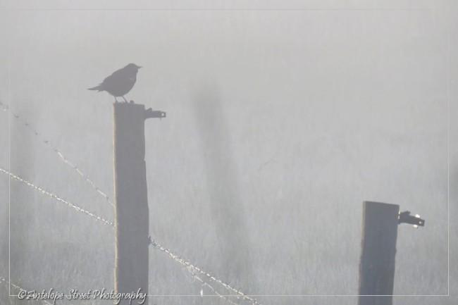 13-fog-bird-on-fence1