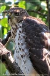 Alberta bird