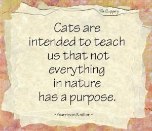 12-cats-intent