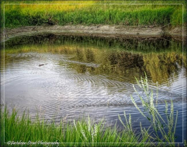 Alberta water