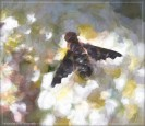 Bee fly - filter