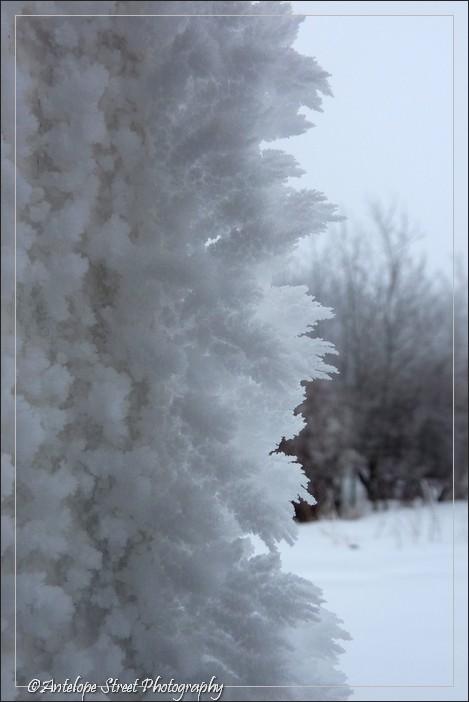 heavy frost Alberta