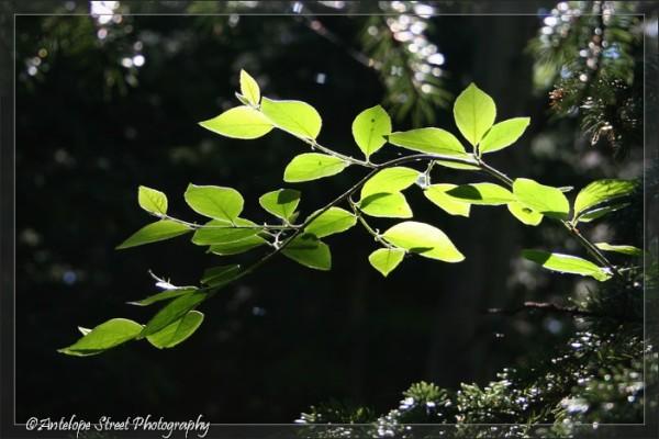 10-leaf3