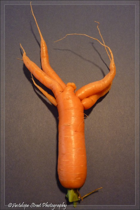 29-carrot-multi-root