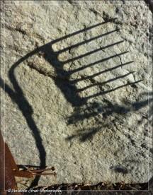 Shadow of a rake