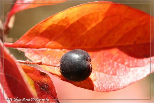 28-fall-leaf