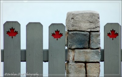 pickets maple leaf