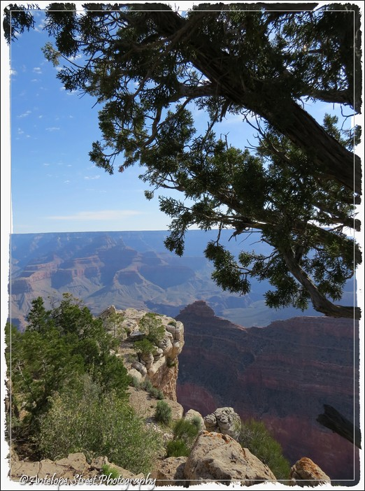 place trees Grand Canyon