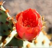Dark Orange Flower close up