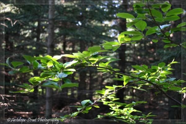 10-leaf2