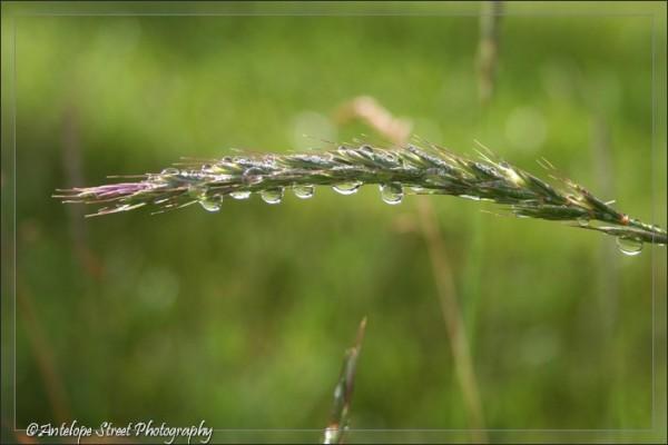 16-grass2