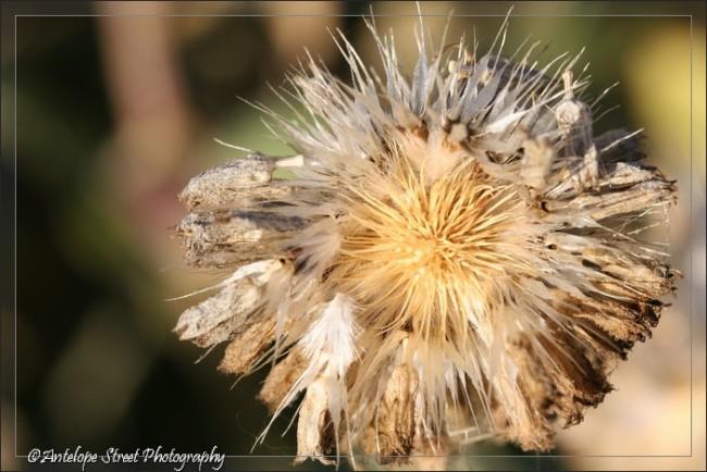 34-seed-of-hope