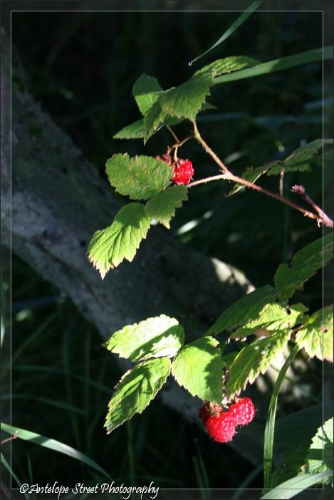 20-raspberry