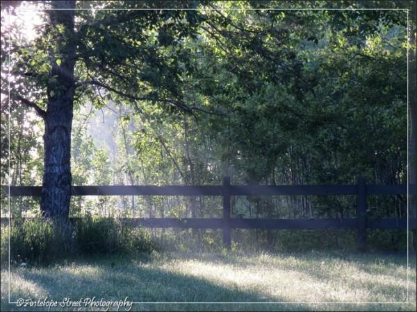 179-fog-fence