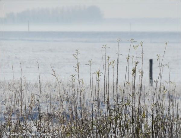 189-fog-field