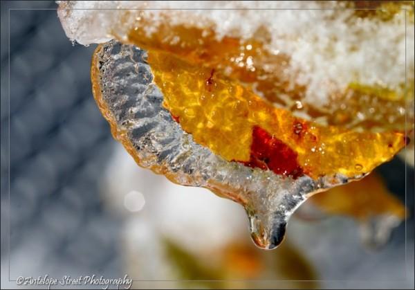 66-ice-leaf3