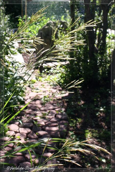 19-grass-path