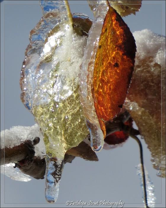 66-ice-leaf1