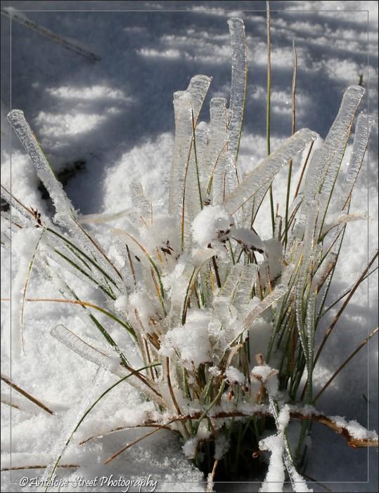 66-ice-grass1