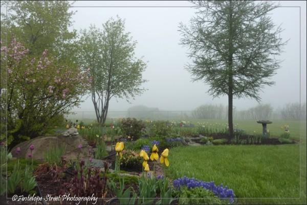 09-fog