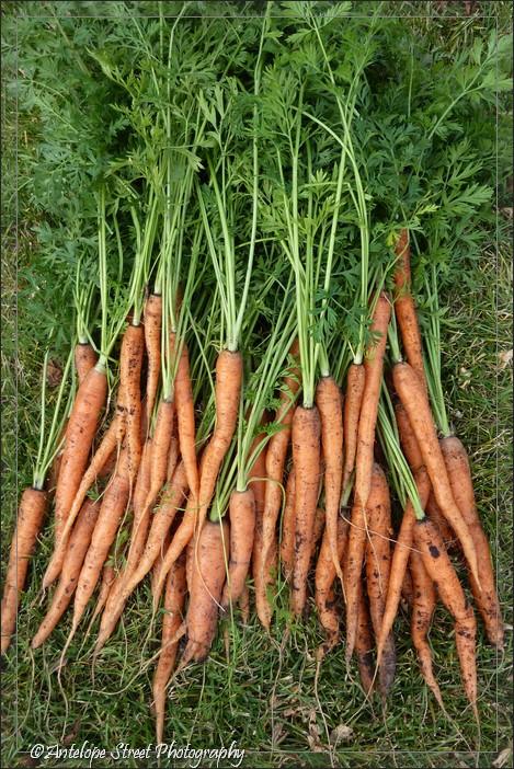28-carrots