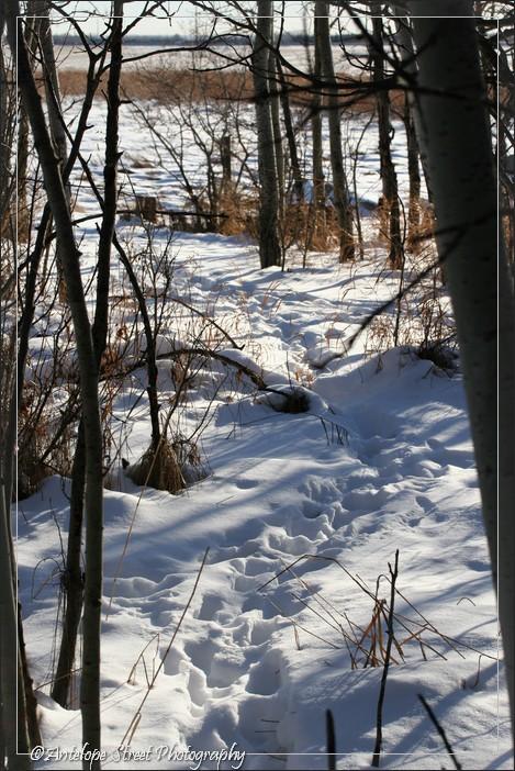animal woods winter