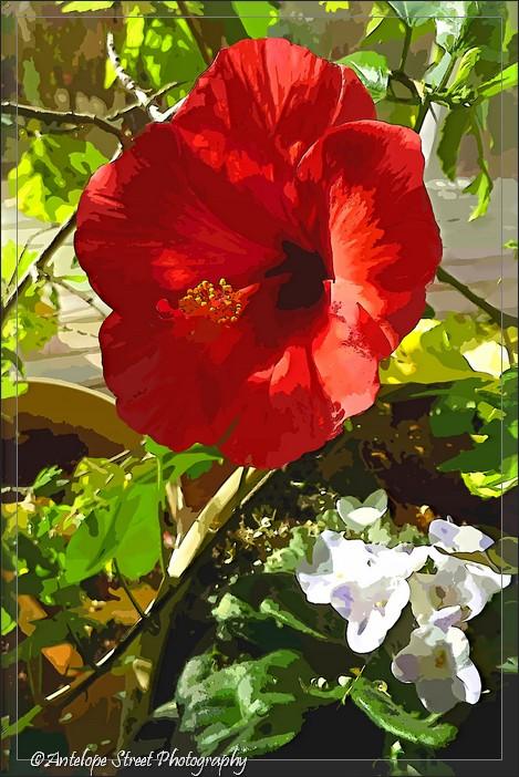 6-fotosketcher-hibiscus-cartoon1