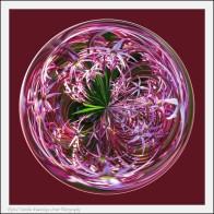 Allium marble