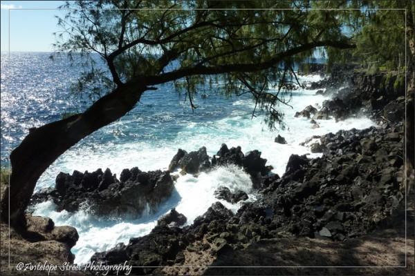 ocean rocks trees