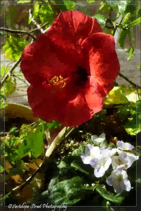 6-fotosketcher-hibiscus-pixelation