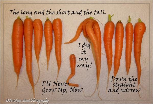 554-carrot-songs